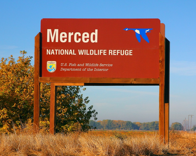IMG_3377 Merced National Wildlife Refuge