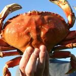NWT_crab