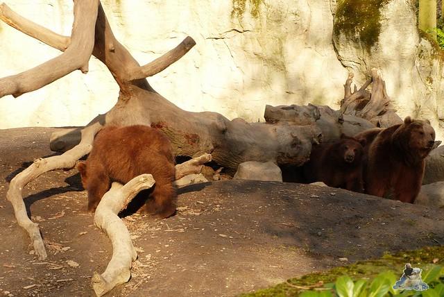 Tierpark Hagenbeck 27.02.2015  97