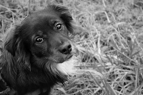 • Dog Eyes