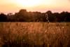 Grashalm im Gegenlicht bei Sonnenuntergang
