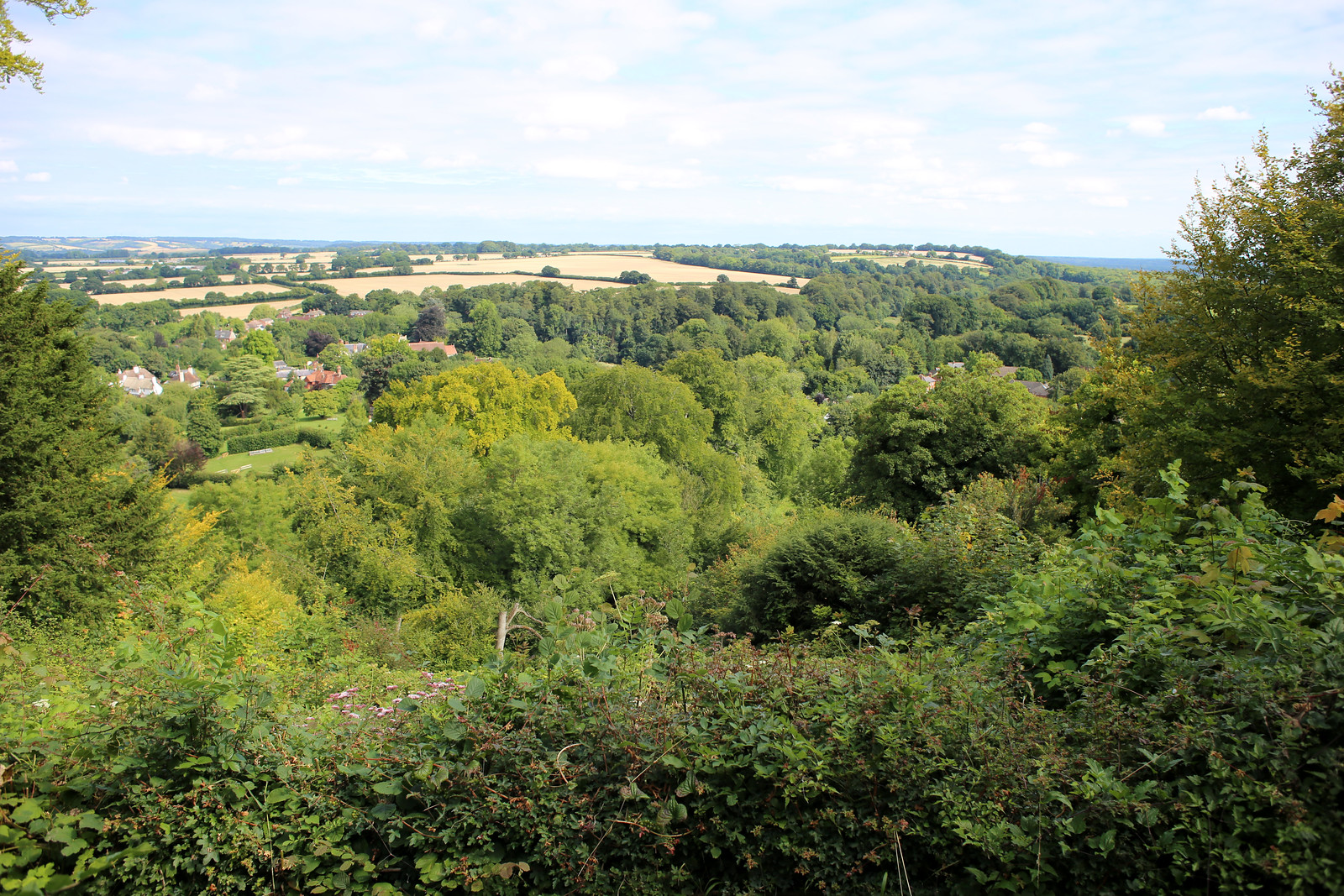 View from Selborne Common