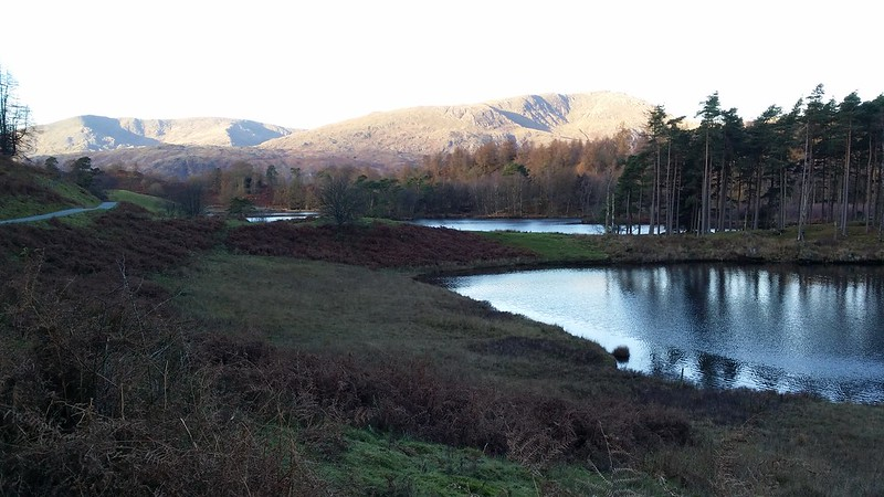 Coniston fells and Tarn Hows #sh