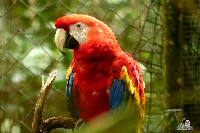 Belize Zoo 19.11.2014 126