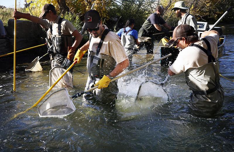 electrofishing 015