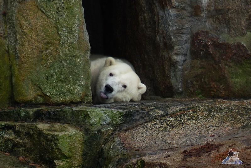 Zoo Berlin 07.12.2014 22