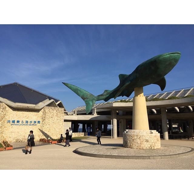 美ら海水族館、今回のいちばん大切な場所!やっと来た!