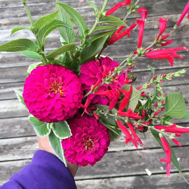 last flowers of the season