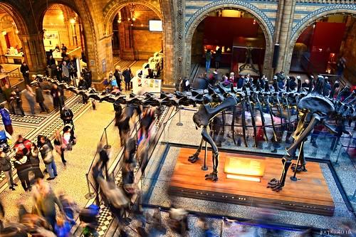 Natural History Museum - Diplodocus