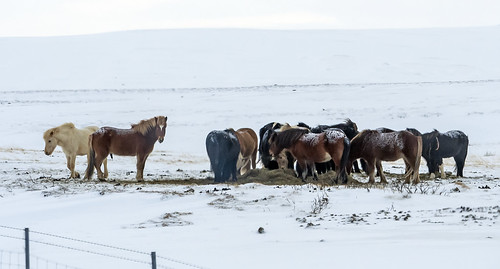 Iceland 438 (135)