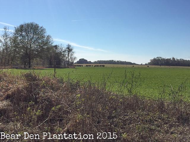 Panhandle Pasture
