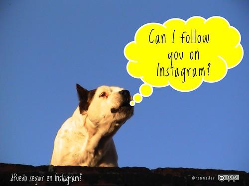 Can I follow you on Instagram? = ¿Puedo seguir en Instagram? #roofdog