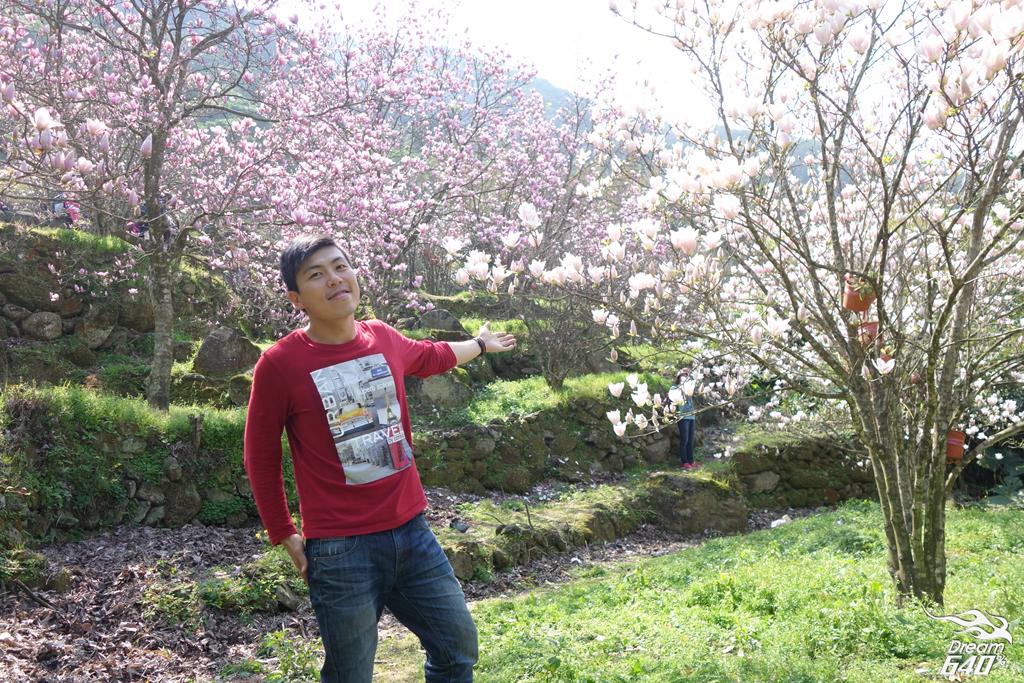 2015楓樹湖木蓮花10