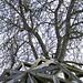 """""""Hyacinthe descendue de l'arbre"""", Séverine Hubard, 2010."""