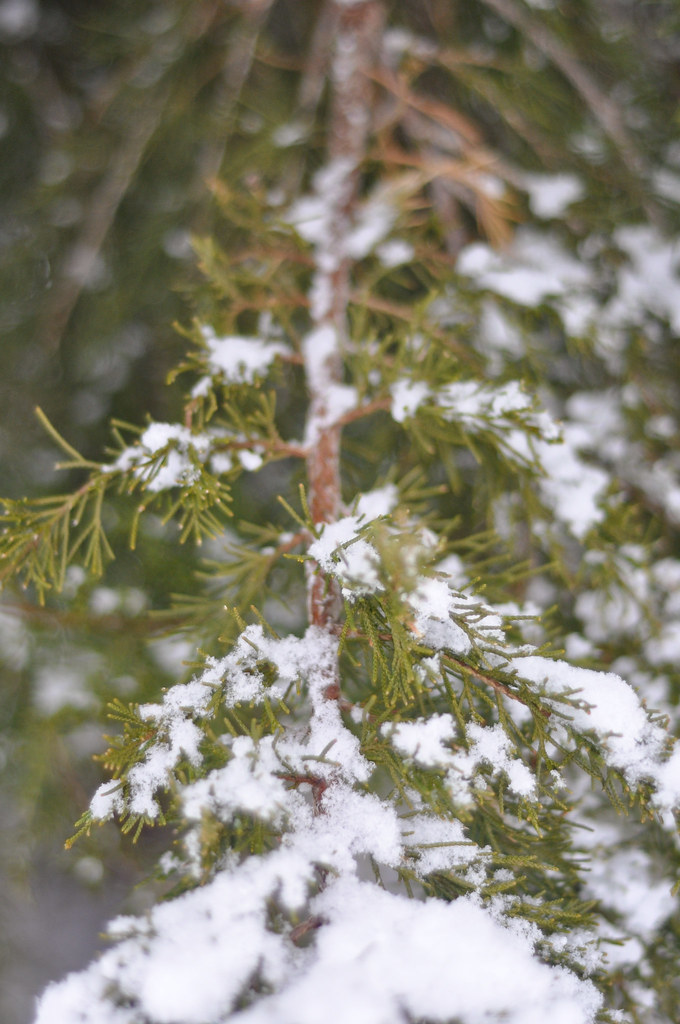 winter (34 of 35)