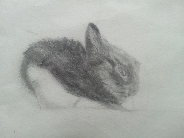 Drawing of Mumpkin