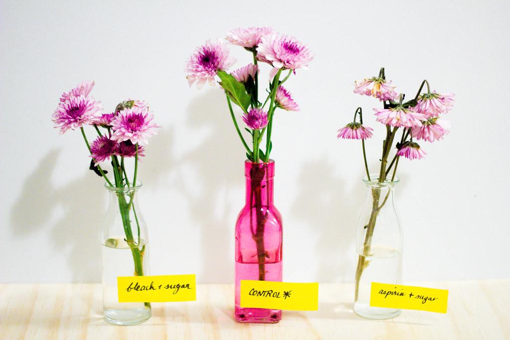 FlowerExperiment-Day2-IMG_2712