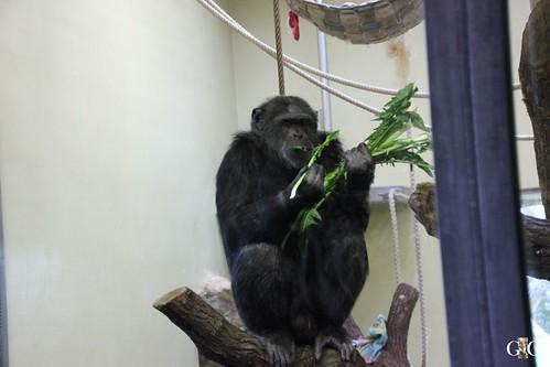 Berliner Zoo 22.02.201568