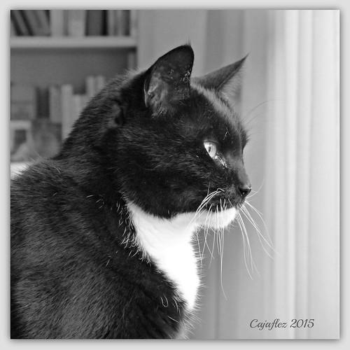 Cortez in black and white