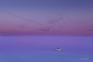 Swan Dream