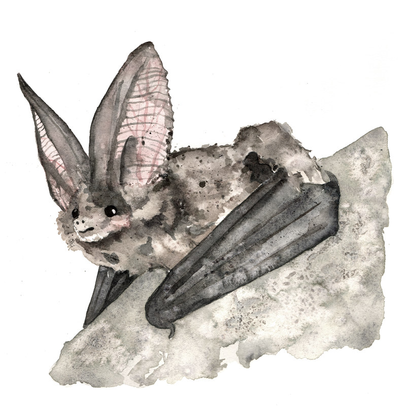 Belt Magazine - Bats