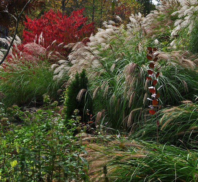 Cotinus with Grasses (1)