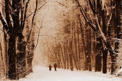 winter snow forest poland
