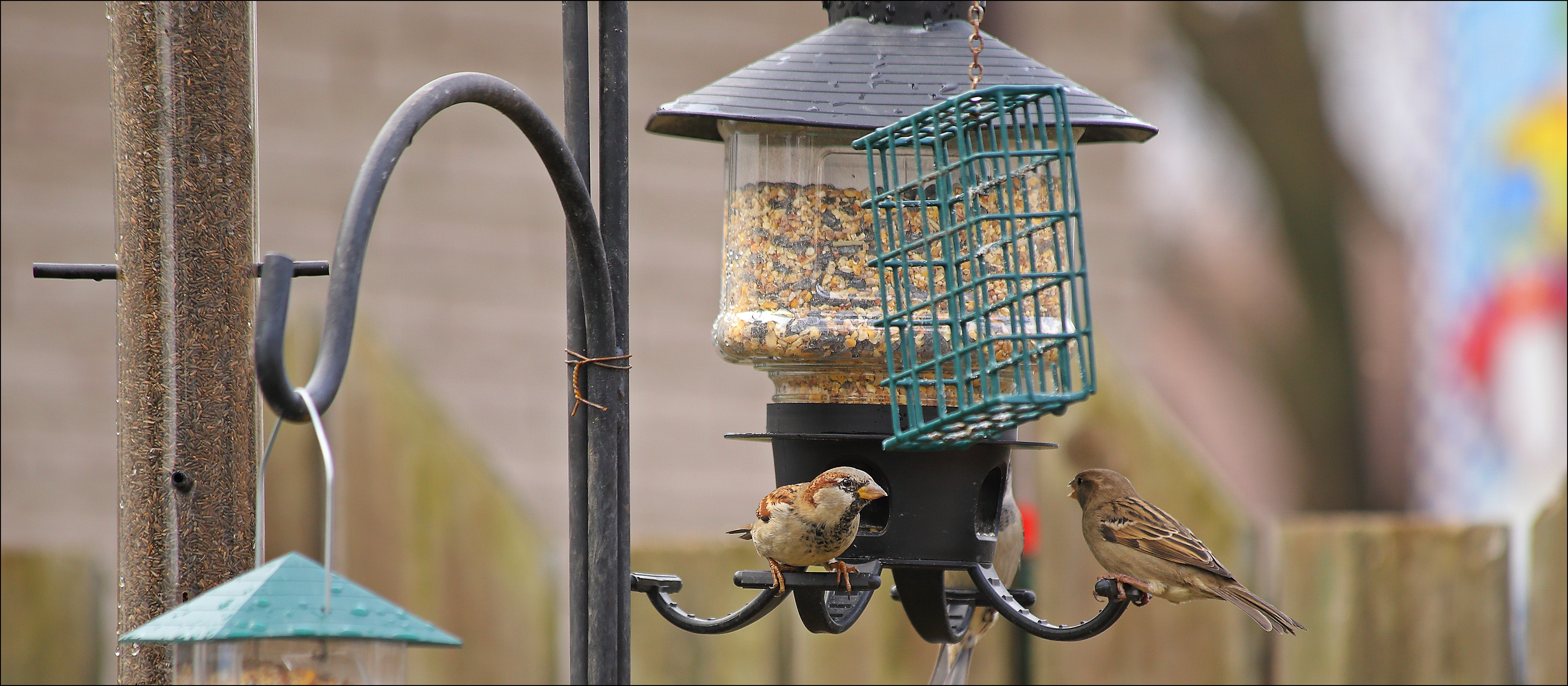 The Sun Is Trying To Shine. birds, canon, feeder, 60d. buy photo