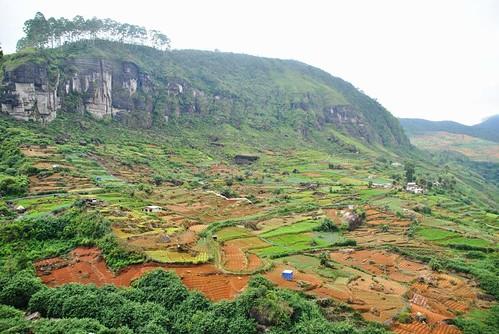 03 Nuwara Eliya y camno a Kandy (10)