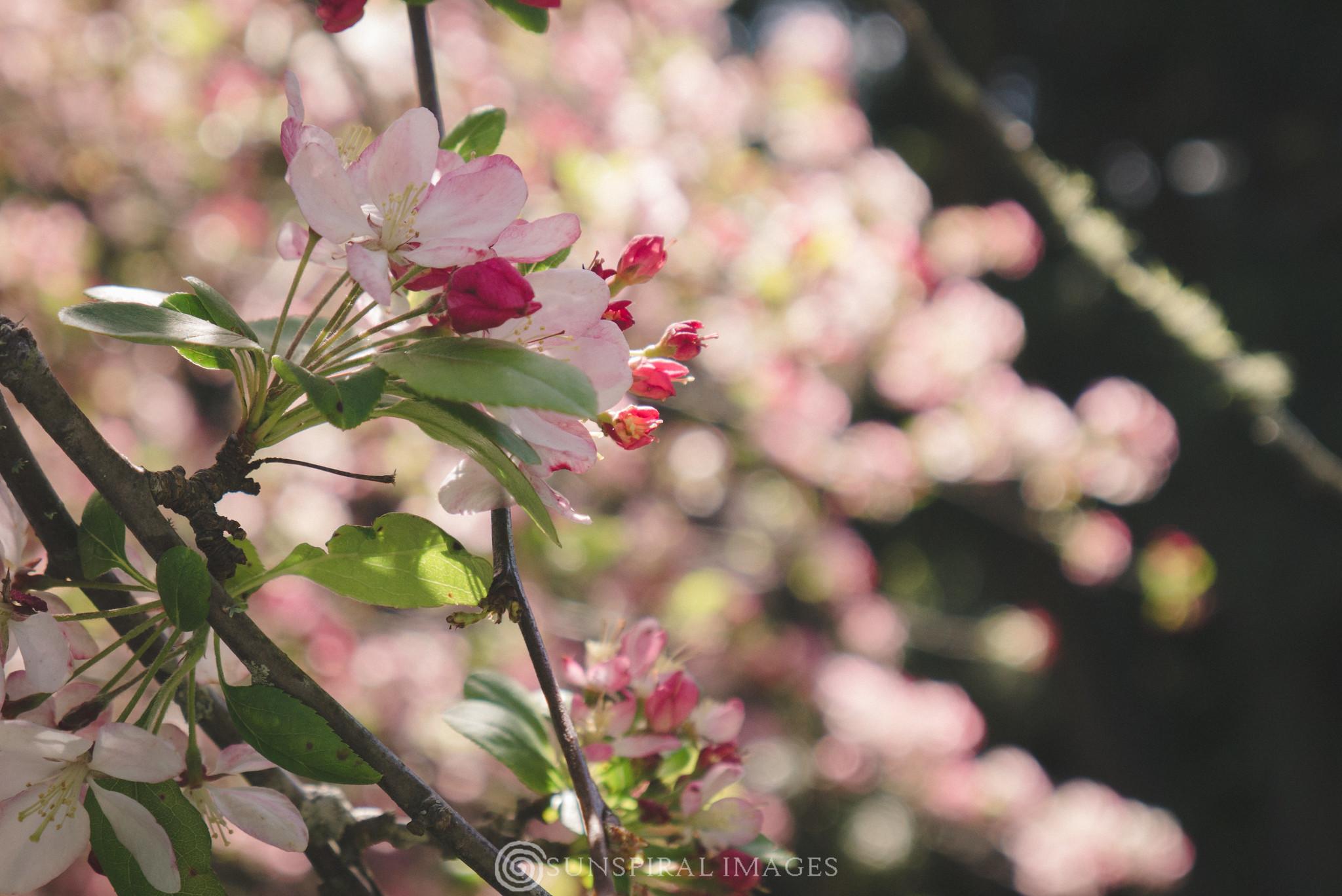Kiwi Spring
