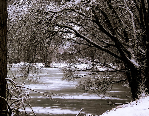 park trees winter snow cold ice nature minnesota landscape frozen midwest scenery freeze winona snowcovered