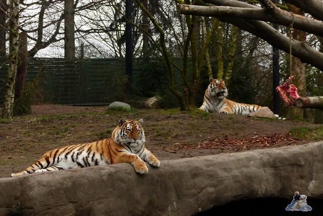 Tierpark Hagenbeck 14.03.2015  156