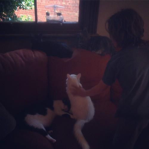 Cat TV (bird feeder stuck to the window) Cat Cafe Melboune
