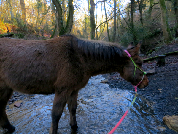 Mule in the Stream