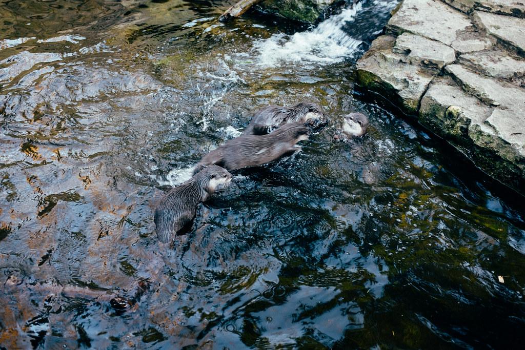 Woodland Park Zoo 13