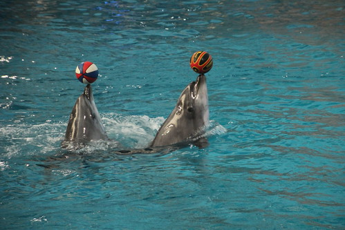 Dolphin performance at Dalian ocean park, China 2014
