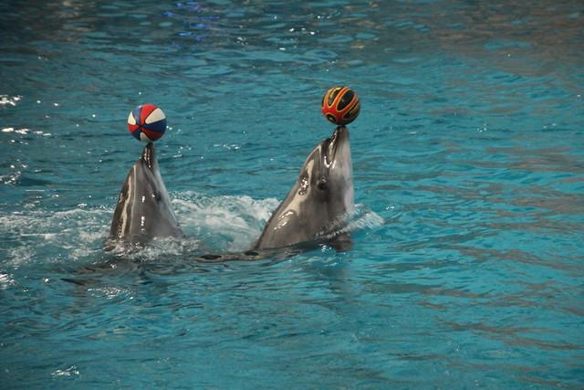 Dolphin performance at Dalian ocean park, China 2014