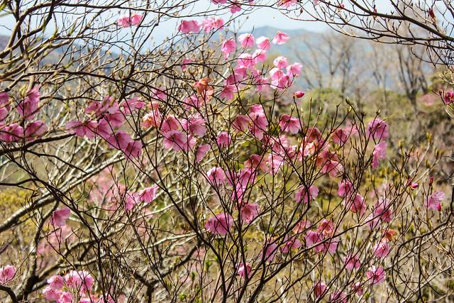 2014-05-06_02526_九州登山旅行.jpg