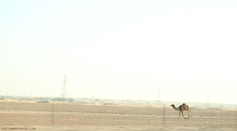 16842389461 5d1d7e5dc4 b - {Dubai 2014} The Dubai Desert Safari Experience