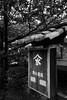 Photo:20160625 Samegai 6 By BONGURI