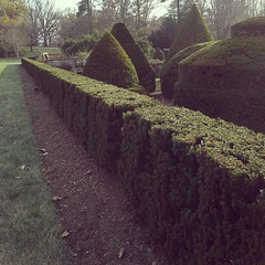 Topiary garden at Longwood...as old as the hills.