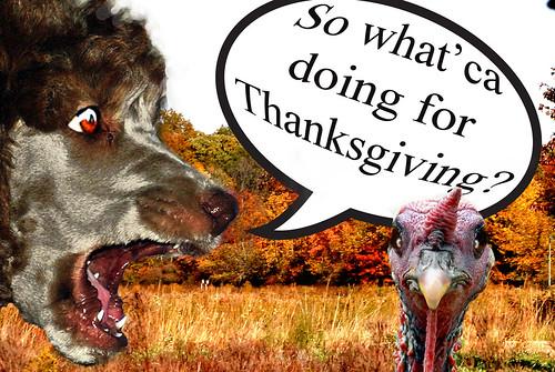 Anjel Thanksgiving 2014