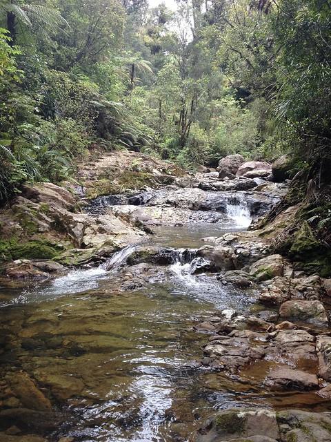 Kauri Grove Walk