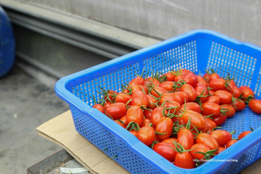 番茄 (30)