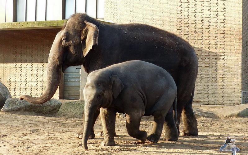 Zoo Berlin 07.12.2014 117