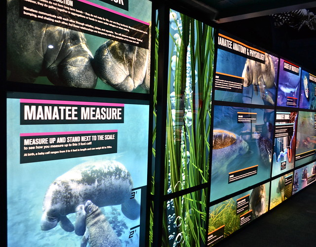 Manatee Viewing Center - Tampa, Florida - Big Bend Plan