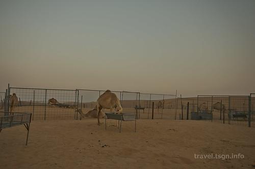 【写真】2014 世界一周 : ドバイ・砂漠(1日目)/2014-12-17/PICT6701