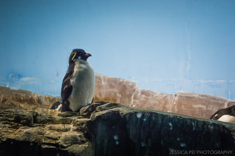 Penguin Encounter Sea World San Antonio Texas