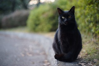 A black cat in Mejo park 2015.01 No.1.