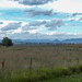 Small photo of Acland landscape